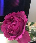 Mari Rose